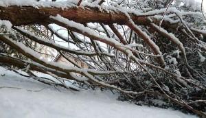 arbre-tombe-sur-chalet